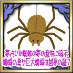 夢占いで蜘蛛の夢の意味に暗示!蜘蛛の巣や巨大蜘蛛は凶夢の証?