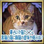 夢占いで猫たくさん!黒猫白猫に飼猫の意味や暗示は?