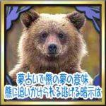 夢占いで熊の夢の意味!熊に追いかけられる逃げるなどの暗示は