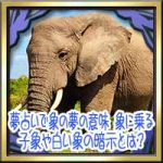 夢占いで象の夢の意味!象に乗る・子象や白い象の暗示とは?