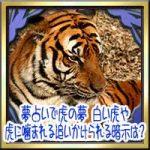 夢占いで虎の夢の意味!白い虎や虎に噛まれる追いかけられる暗示は?