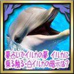夢占いでイルカの夢!イルカに乗る触る・白イルカの暗示は?