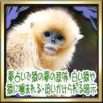 夢占いで猿の夢の意味!白い猿や猿に噛まれる・追いかけられる暗示は?