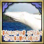 夢占いでクジラ(鯨)の夢!クジラと泳ぐ・クジラに乗る襲われる暗示は?