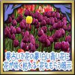 夢占いで花の夢!白い青い花に花が咲く枯れる・花をもらう暗示は?