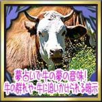 夢占いで牛の夢の意味!牛の群れやふん・牛に追いかけられる乗る暗示は?