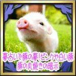 夢占いで豚の夢!ピンクや白い豚や豚の丸焼き・追いかけられる暗示